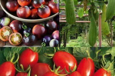بذر صیفیجات و سبزیجات خاص و کمیاب