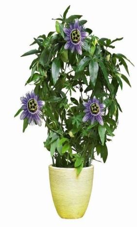 بذر گیاهان گرمسیری و استوایی