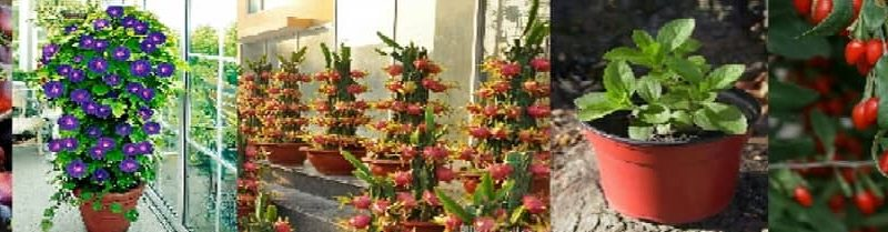باغ بهشت