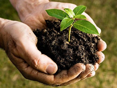 کدام کود دامی برای گیاهان شما مناسب تر است؟