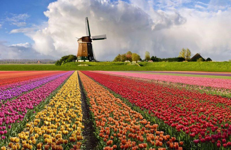 کشور هلند، کشور کوچکی که غذای دنیا را تامین می کند!!!