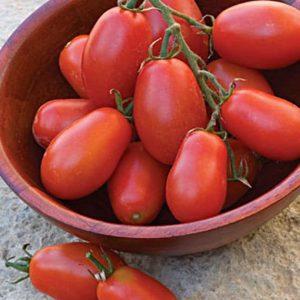 بذر گوجه فرنگی روما چری درختی پربار