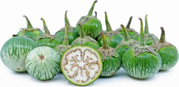 بذر بادمجان سبز تایلندی ارگانیک
