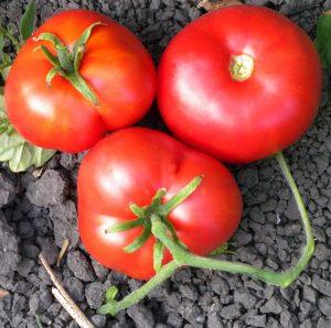 بذر گوجه فرنگی موسکوویچ زودرس ارگانیک