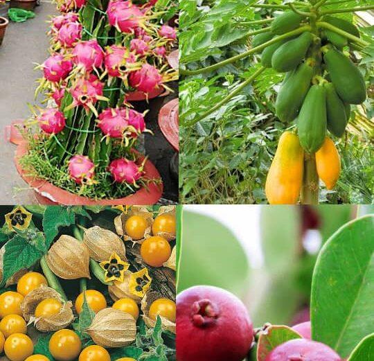بذر 5 میوه استوایی