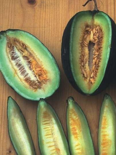 بذر خربزه شیرین تندرال ارگانیک