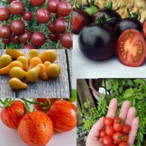 بذر میکس 5 رقم گوجه فرنگی